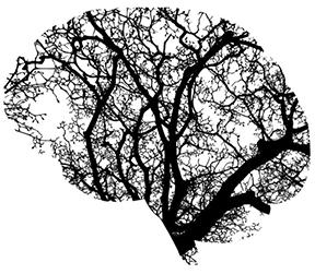 brain stem power