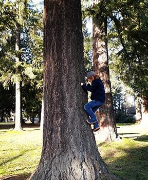 tree climbing boss