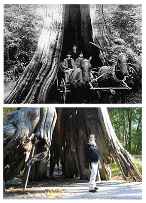 same tree different times