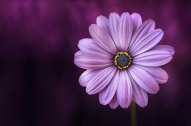 crown chakra symbol flower