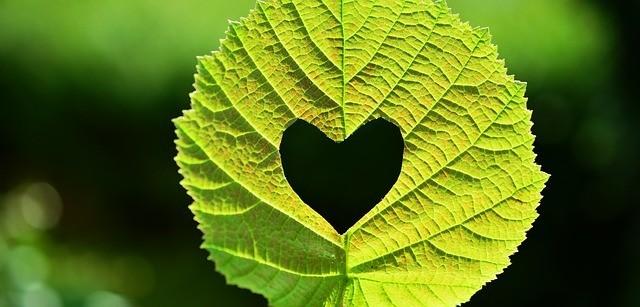 love like nature