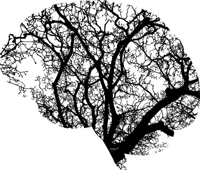 mind your neural garden